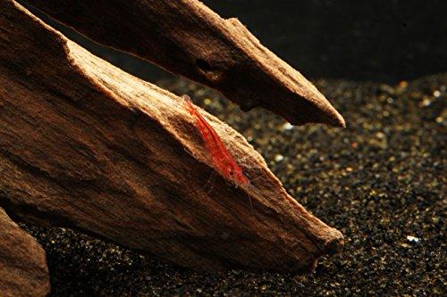50-Cherry-Shrimp-Neocaridina-13-12-2-Marimo-Moss-Balls-0