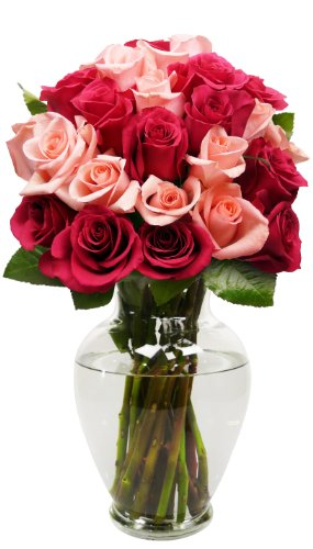 Benchmark-Bouquets-24-Long-Stem-Blushing-Beauty-Rose-Bouquet-0