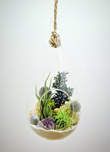 Bliss-Gardens-Teardrop-Air-Plant-Terrarium-with-Purple-Amethyst-Juniper-Moss-Extra-Large-13-Shabby-Chic-0-0