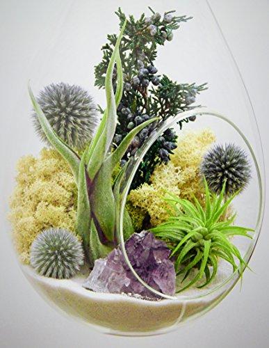 Bliss-Gardens-Teardrop-Air-Plant-Terrarium-with-Purple-Amethyst-Juniper-Moss-Extra-Large-13-Shabby-Chic-0-1