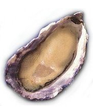 Charleston-Seafood-Oysters-50-count-box-0