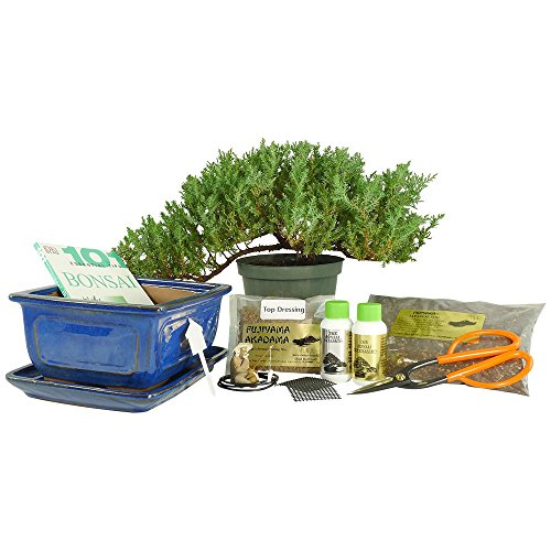 Dallas-Bonsai-Gardens-Premium-Bonsai-Kit-Informal-Upright-1059-0-0