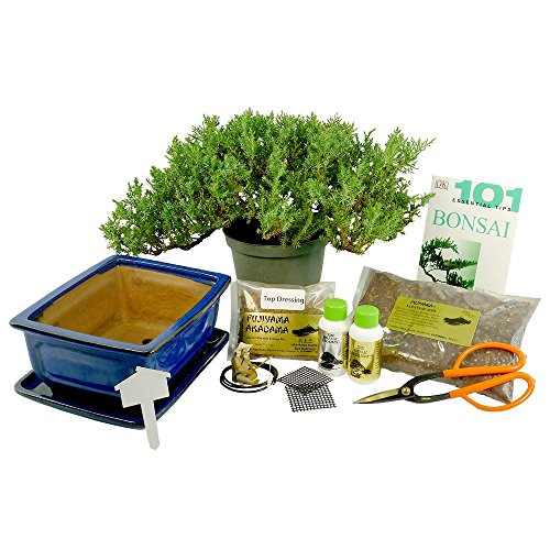 Dallas-Bonsai-Gardens-Premium-Bonsai-Kit-Informal-Upright-1059-0